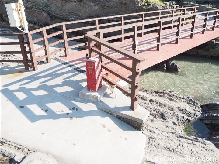 橋を渡る茶トラ白猫さん