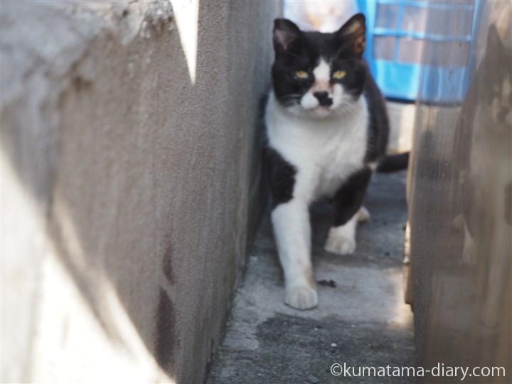 黒白猫さん顔
