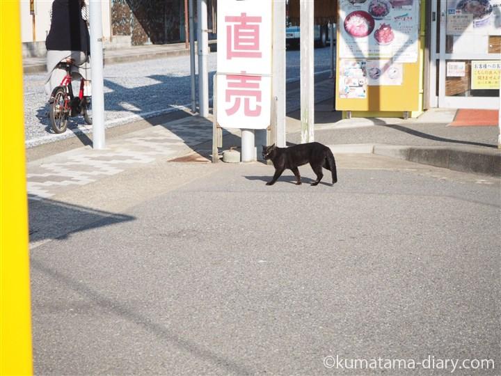 歩く黒猫さん