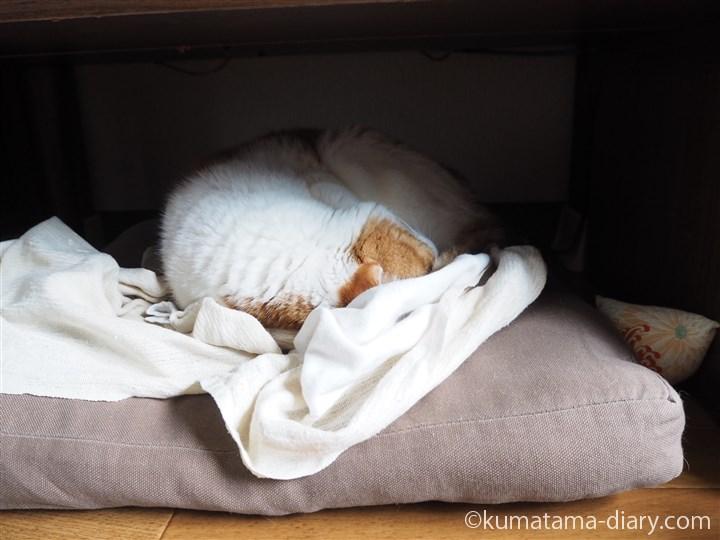 テレビ台の下で寝るたまき