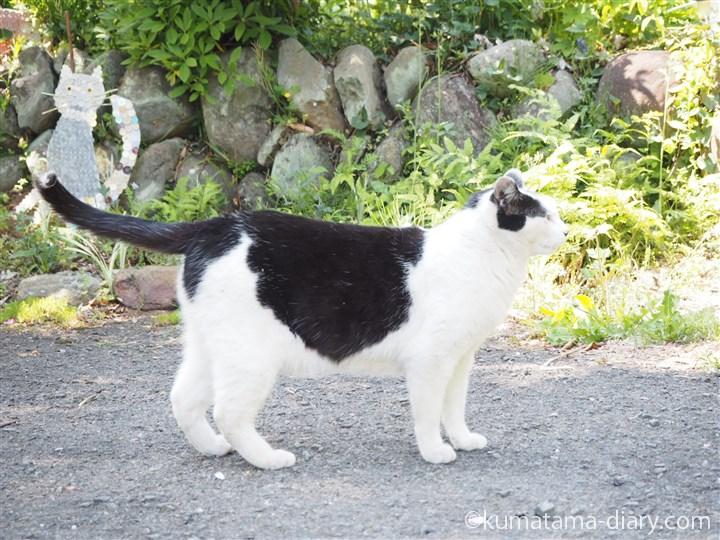 白黒猫さん横から