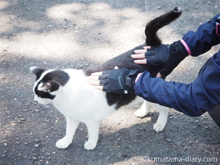 白黒猫さんをなでなで