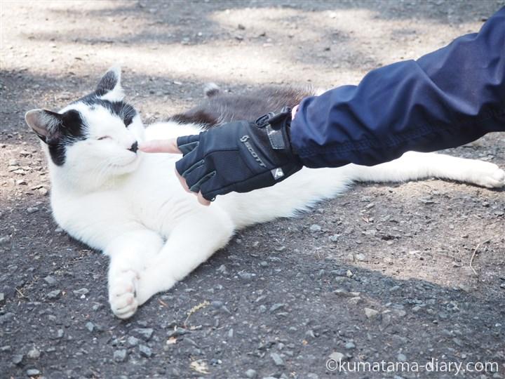 におう白黒猫さん