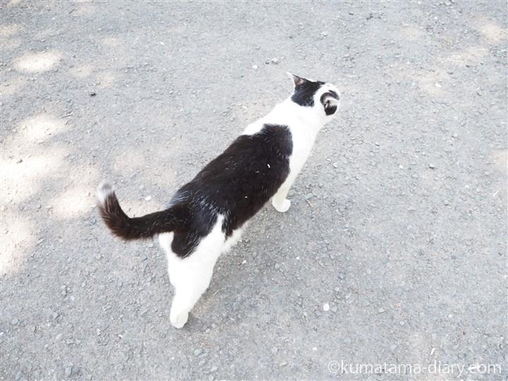 白黒猫さん上から