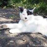 【青梅】古民家ギャラリーわあすの「ねこネコ猫展」と看板猫さん