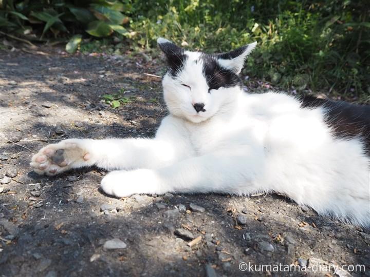 わあすの白黒猫さん