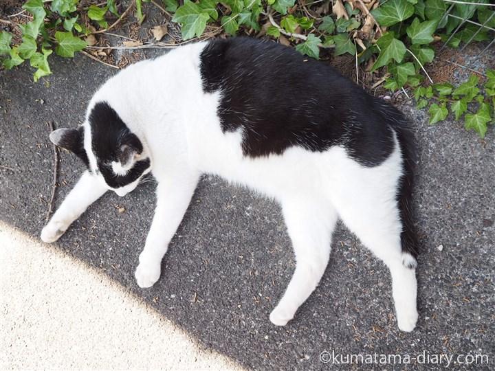 足を投げ出して寝る白黒猫さん