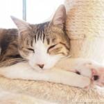 保護猫カフェ「funnyCat(ファニーキャット)」のトライアル制度