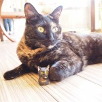 保護猫カフェ「funnyCat」で木彫りのモデルのサビ猫さんと写真を撮りました