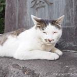 【巣鴨】眠そうな染井霊園のキジトラ白猫さん