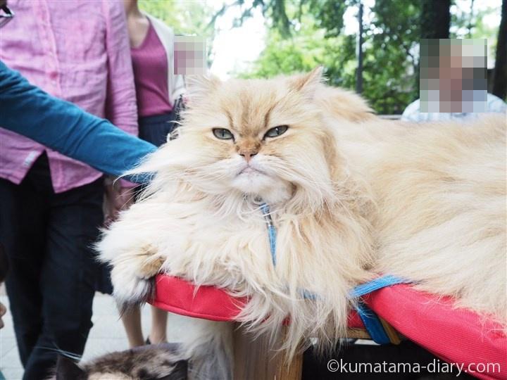 ペルシャ猫さん