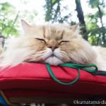 【吉祥寺】井の頭公園のペルシャ猫さんたち