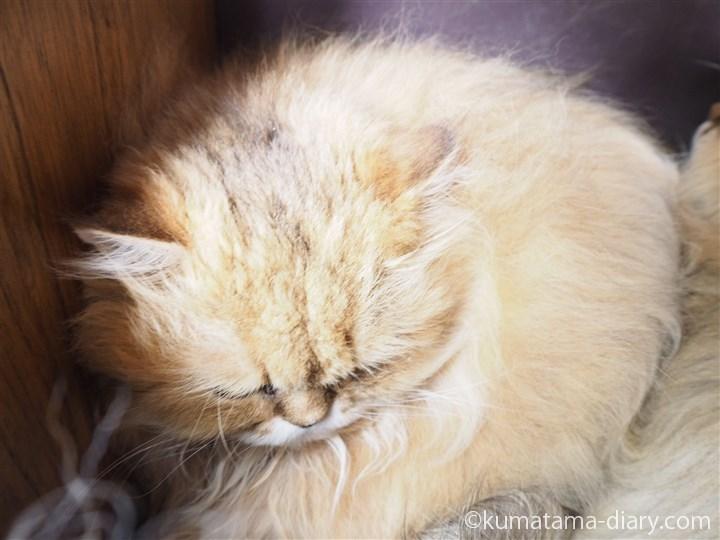 バギーの中の猫さん