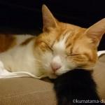 くまのしっぽを枕にして眠るたまき