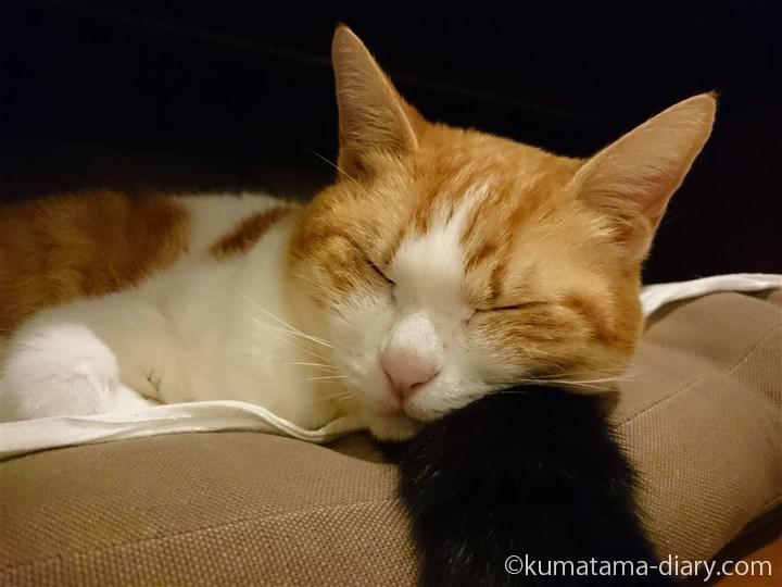 しっぽ枕で寝るたまき