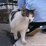 彼にもスリスリする近所のキジトラ白猫さん