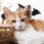 メイズバスケットの角にあごを乗せる猫