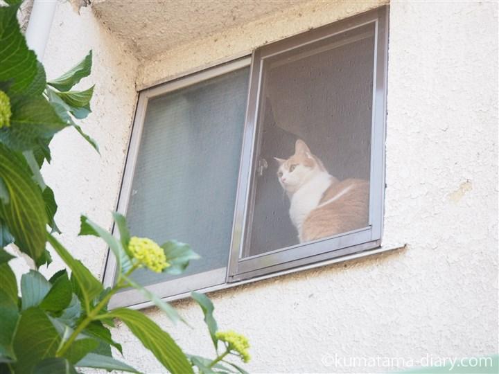 中野坂上の猫さん
