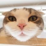 東京23区のペット可賃貸物件専門店「ペット賃貸カンパニー」の猫さん