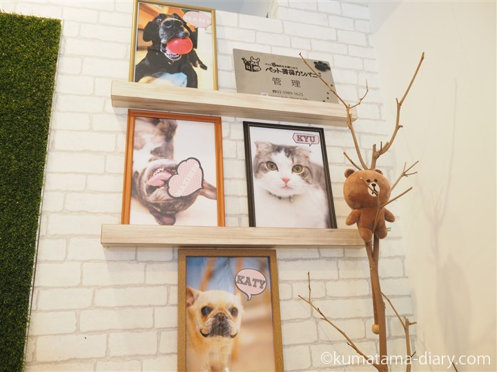 ペット賃貸カンパニーの犬猫