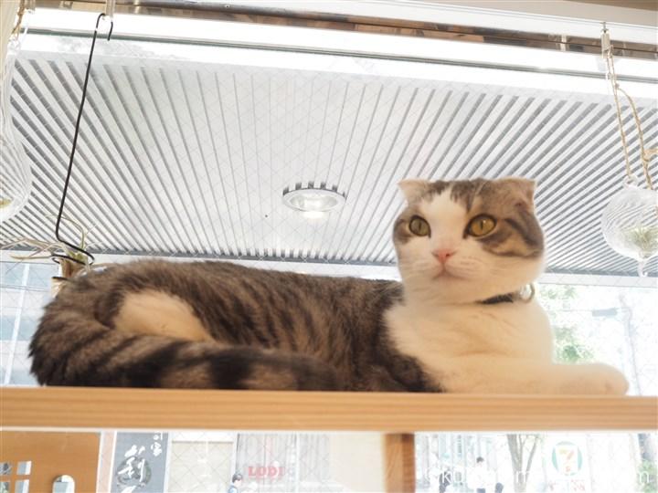 ペット賃貸カンパニーの猫