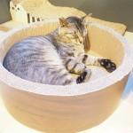 保護猫カフェ「ネコリパブリック池袋店」のいろんな場所で寝ていた猫さんたち