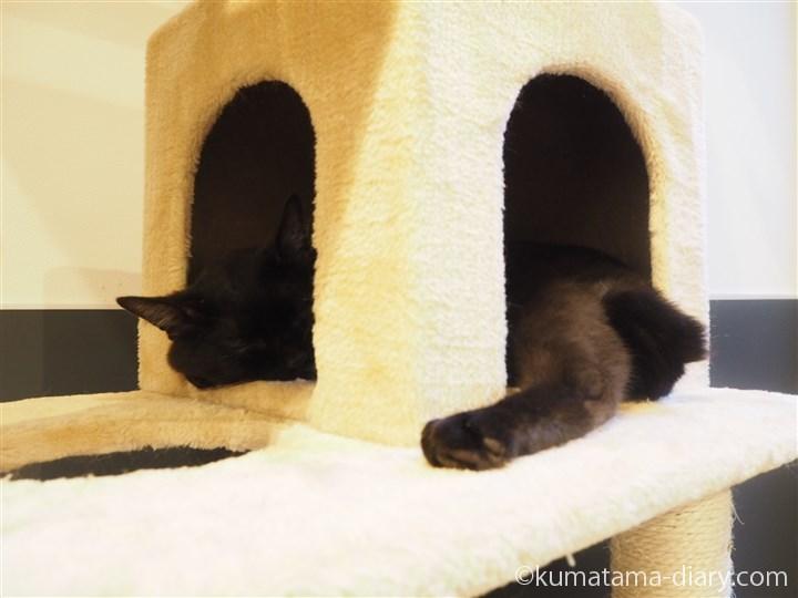 キャットタワーの黒猫さん