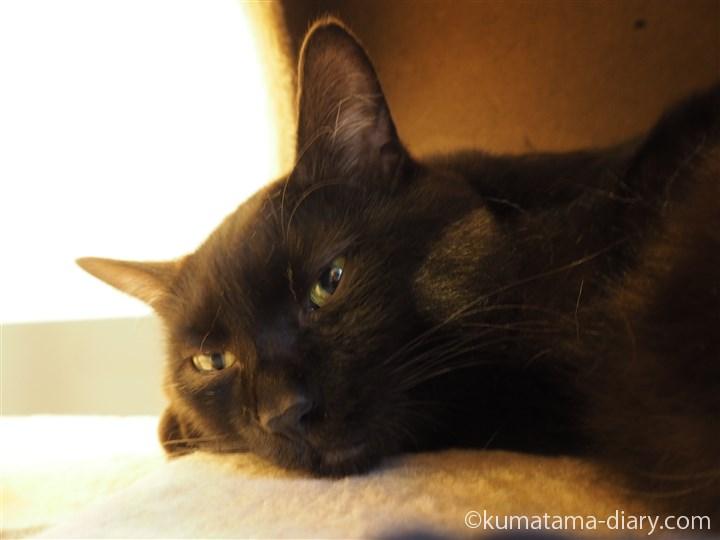 キャットタワーの黒猫さん寝顔