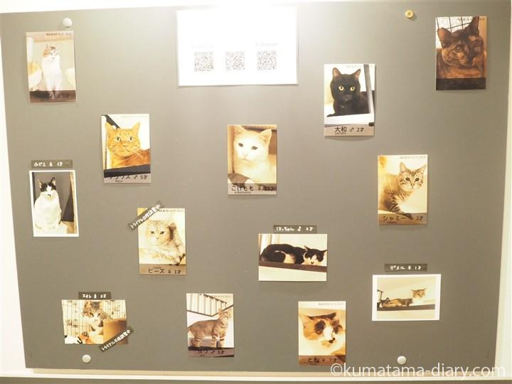 ネコリパブリック池袋店の猫さんたち
