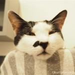 「ネコリパブリック池袋店」の白黒猫さんはベッドにあごを乗せて寝ていました