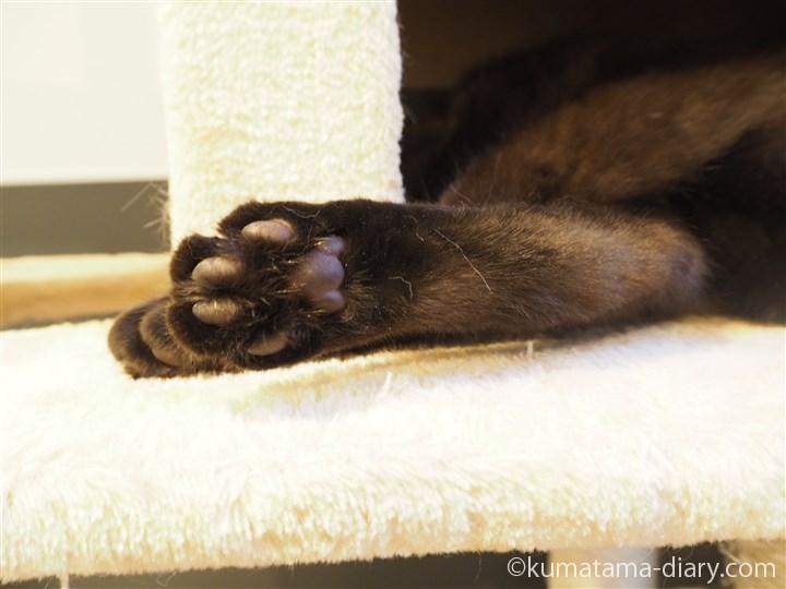 キャットタワーの黒猫さん肉球