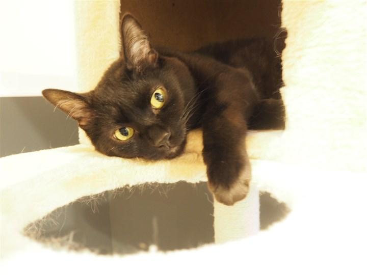 キャットタワーの黒猫さんお目々