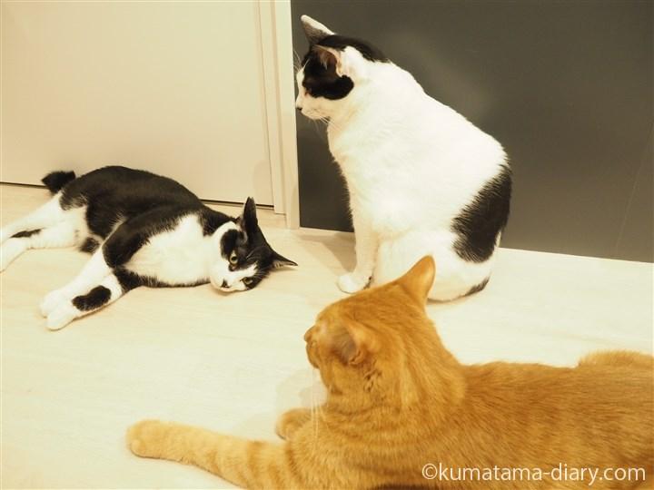 寝転がる白黒猫さん
