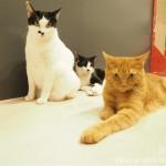 「ネコリパブリック池袋店」のエサを心待ちにする3匹の猫さん