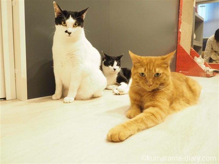 白黒猫さんと茶トラ猫さん