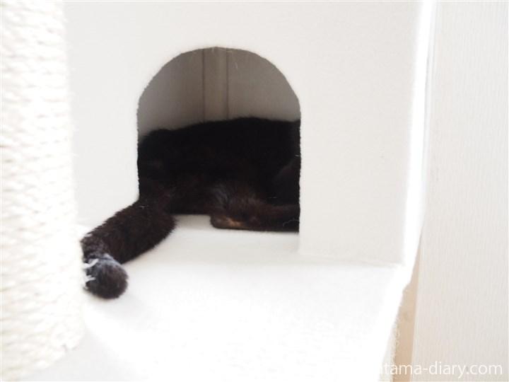 キャットタワーで寝るくま