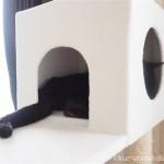 「キャッツデポ」のハンモック付突っ張りタイプキャットタワーのボックスで眠る猫
