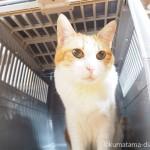アイリスオーヤマの「トラベルキャリー グレー/ブルー HC-520」を猫にプレゼント