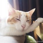 前足にあごを乗せてIKEAの「DUKTIG 人形用ベッド」で寝る猫