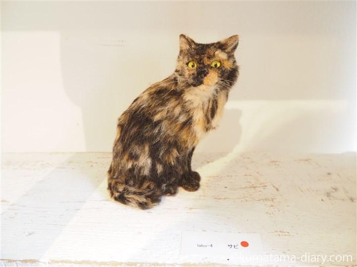 猫ラボさんサビ猫