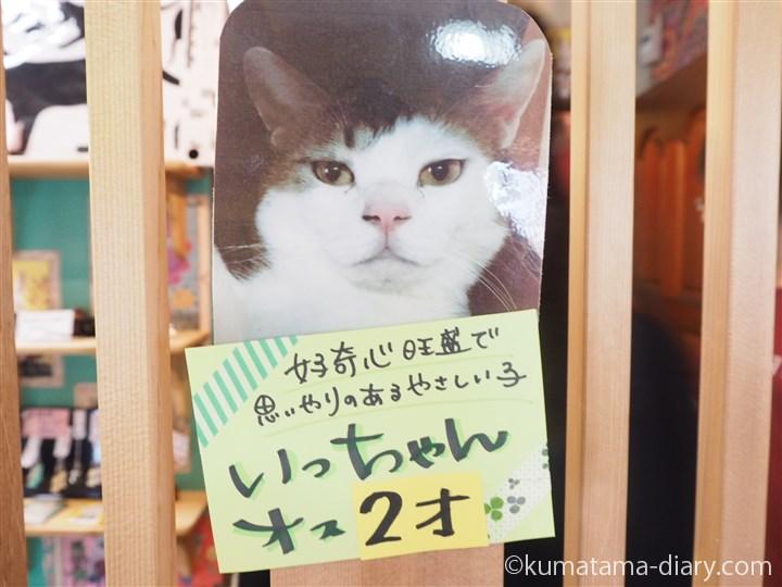 いっちゃん紹介写真