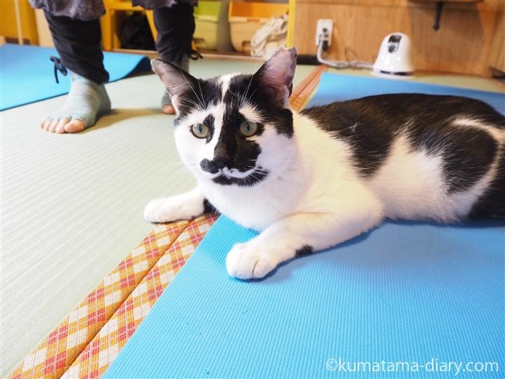 ヨガマットの上の白黒猫のしょう太くん