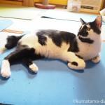 「ネコリパブリック東京御茶ノ水店」でのネコヨガと、まったりモードの猫さんたち