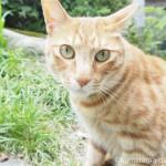 【千葉県匝瑳市】猫がたくさんいる「松山庭園美術館」に行ってきました