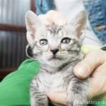 松山庭園美術館の「仔猫カフェ」で4匹の子猫さんと触れ合いました~その1~