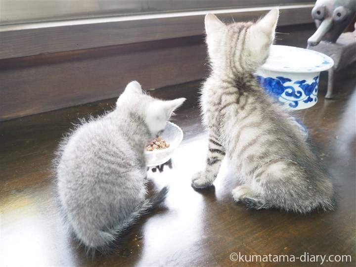子猫さんたち