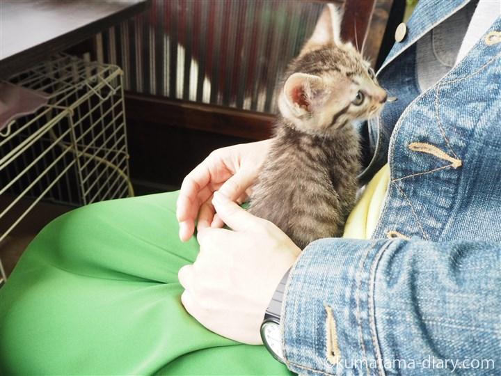 キジトラ猫さんも抱っこ