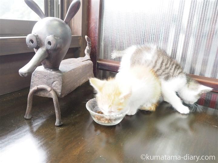 茶トラ白猫さんとキジトラ白猫さん