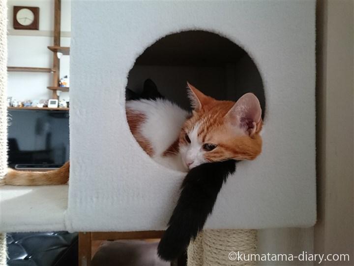 しっぽを枕にするたまき