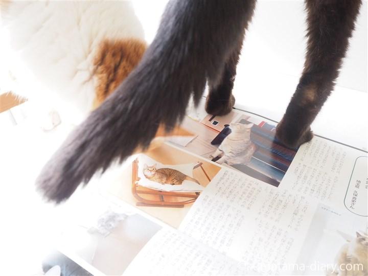 月刊猫とも新聞に乗るくまたま
